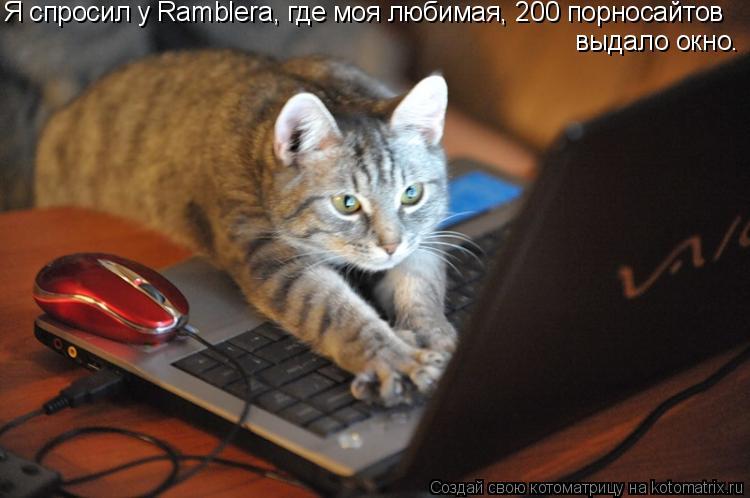 Котоматрица: Я спросил у Ramblera, где моя любимая, 200 порносайтов  выдало окно.
