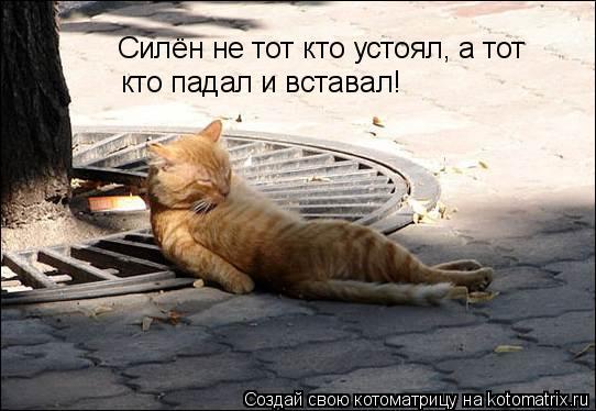 Котоматрица: Силён не тот кто устоял, а тот  кто падал и вставал!