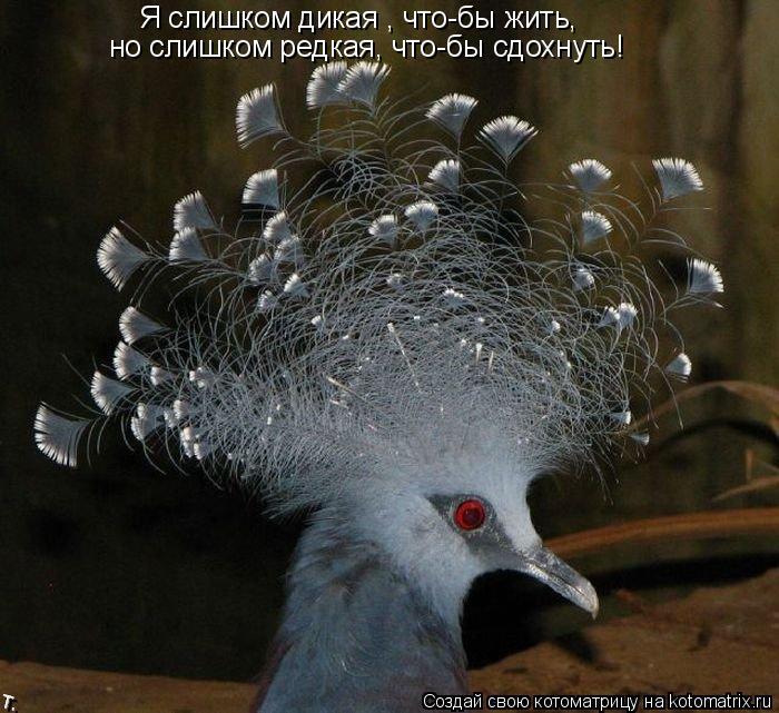 Котоматрица: Я слишком дикая , что-бы жить, но слишком редкая, что-бы сдохнуть!