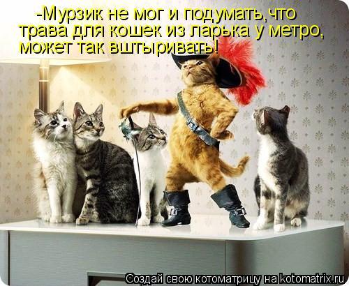 Котоматрица: -Мурзик не мог и подумать,что трава для кошек из ларька у метро, может так вштыривать!