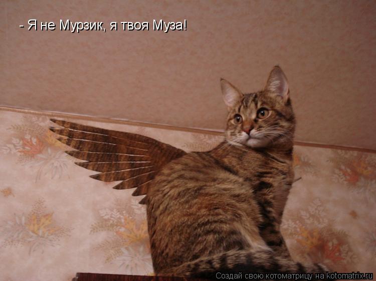 Котоматрица: - Я не Мурзик, я твоя Муза!