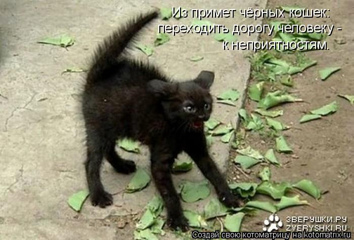 Котоматрица: Из примет чёрных кошек: переходить дорогу человеку -  к неприятностям.