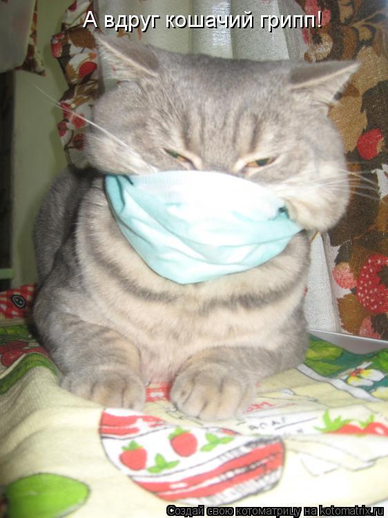 Котоматрица: А вдруг кошачий грипп!