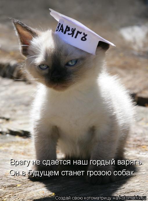 Котоматрица: Врагу не сдаётся наш гордый варягъ. Он в будущем станет грозою собак.