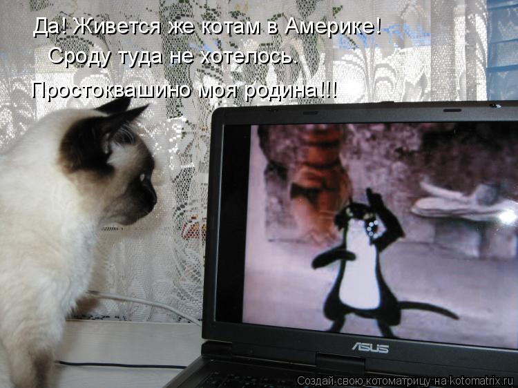 Котоматрица: Да! Живется же котам в Америке! Сроду туда не хотелось. Простоквашино моя родина!!!