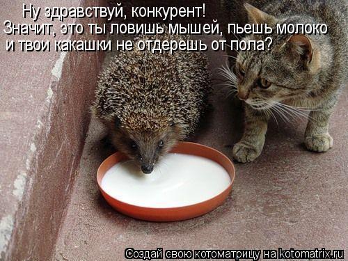 Котоматрица: Ну здравствуй, конкурент! Значит, это ты ловишь мышей, пьешь молоко и твои какашки не отдерешь от пола?