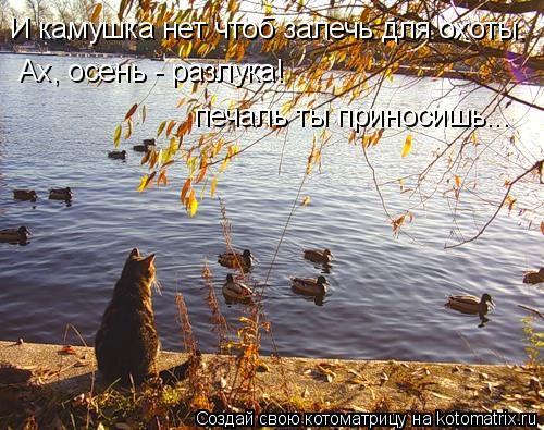 Котоматрица: И камушка нет чтоб залечь для охоты. Ах, осень - разлука!  печаль ты приносишь...