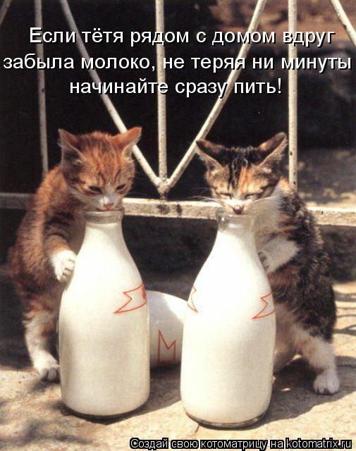 Котоматрица: Если тётя рядом с домом вдруг забыла молоко, не теряя ни минуты начинайте сразу пить!