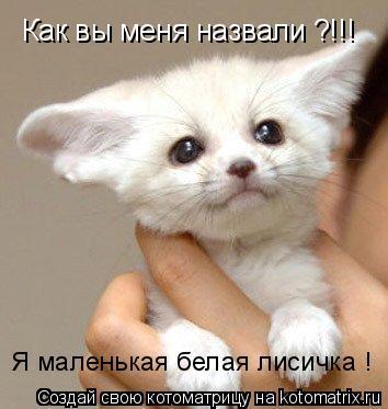 Котоматрица: Как вы меня назвали ?!!! Я маленькая белая лисичка !