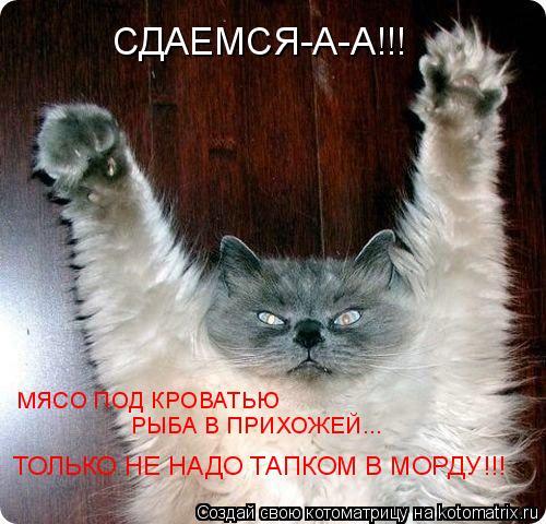 Котоматрица: МЯСО ПОД КРОВАТЬЮ РЫБА В ПРИХОЖЕЙ... ТОЛЬКО НЕ НАДО ТАПКОМ В МОРДУ!!! СДАЕМСЯ-А-А!!!