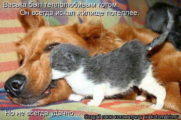 Котоматрица: Васька был теплолюбивым котом. Он всегда искал жилище потеплее. Но не всегда удачно...