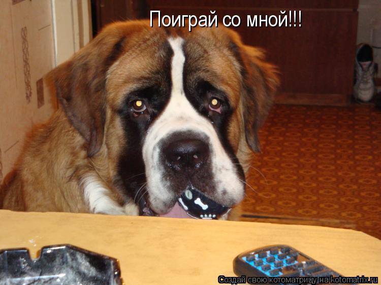 Котоматрица: Поиграй со мной!!!