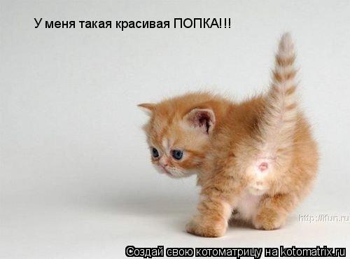 Котоматрица: У меня такая красивая ПОПКА!!!