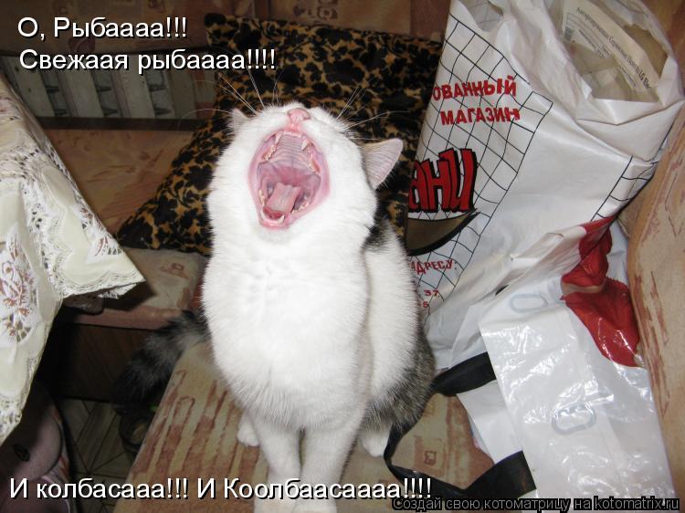 Котоматрица: О, Рыбаааа!!! Свежаая рыбаааа!!!! И колбасааа!!! И Коолбаасаааа!!!!
