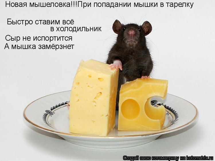 Котоматрица: Быстро ставим всё  в холодильник Новая мышеловка!!!При попадании мышки в тарелку Сыр не испортится А мышка замёрзнет