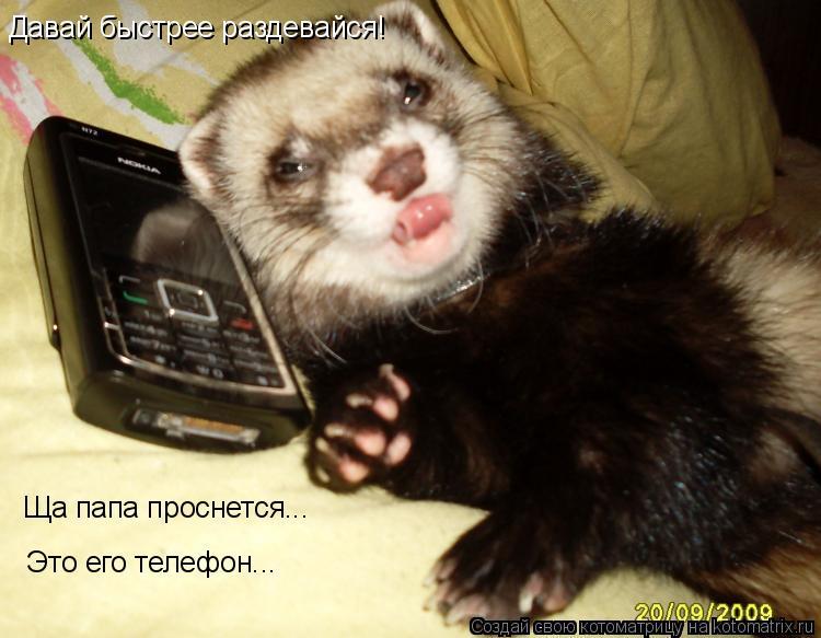 Котоматрица: Давай быстрее раздевайся! Ща папа проснется... Это его телефон...