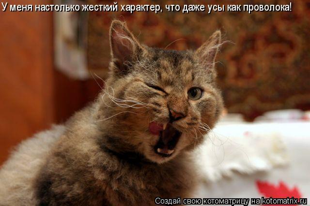 Котоматрица: У меня настолько жесткий характер, что даже усы как проволока!