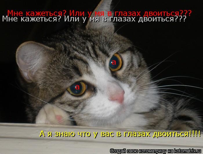 Котоматрица: а а Мне кажеться? Или у мя в глазах двоиться??? Мне кажеться? Или у мя в глазах двоиться??? А я знаю что у вас в глазах двоиться!!!!