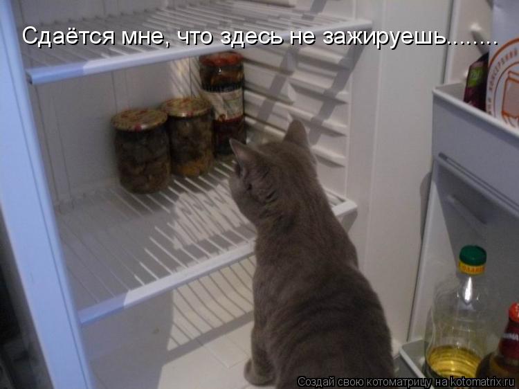 Котоматрица: Сдаётся мне, что здесь не зажируешь........