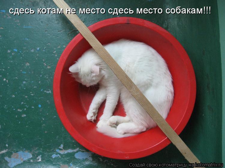 Котоматрица: сдесь котам не место сдесь место собакам!!!