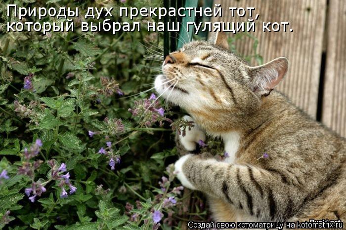 Котоматрица: Природы дух прекрастней тот, который выбрал наш гулящий кот.