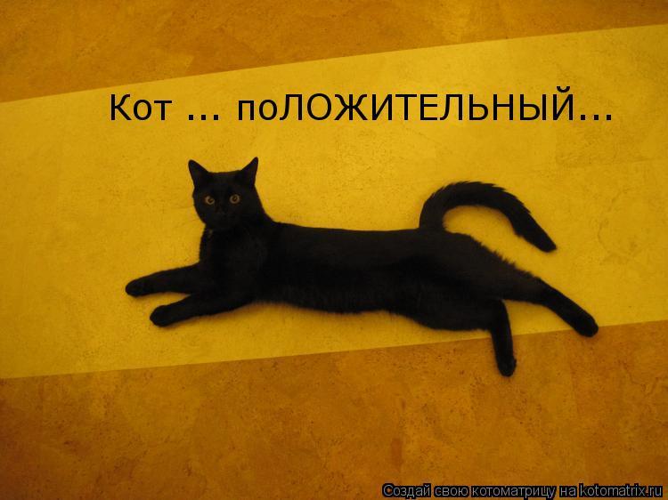 Котоматрица: Кот ... поЛОЖИТЕЛЬНЫЙ...