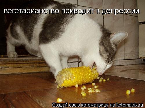 Котоматрица: вегетарианство приводит к депрессии