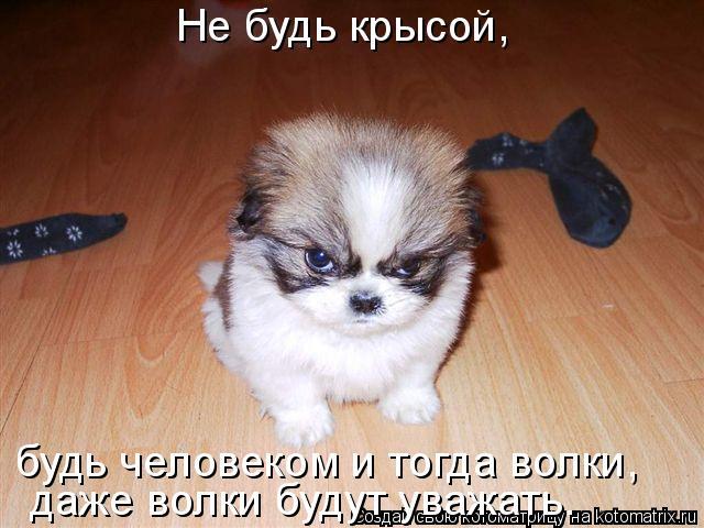Котоматрица: Не будь крысой, будь человеком и тогда волки,  даже волки будут уважать.