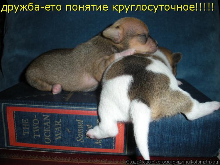 Котоматрица: дружба-ето понятие круглосуточное!!!!!