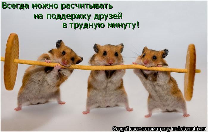 Котоматрица: Всегда можно расчитывать на поддержку друзей в трудную минуту!