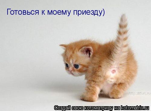 Котоматрица: Готовься к моему приезду)