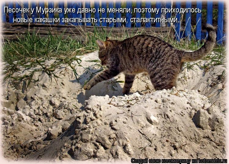 Котоматрица: Песочек у Мурзика уже давно не меняли, поэтому приходилось новые какашки закапывать старыми, сталактитными.