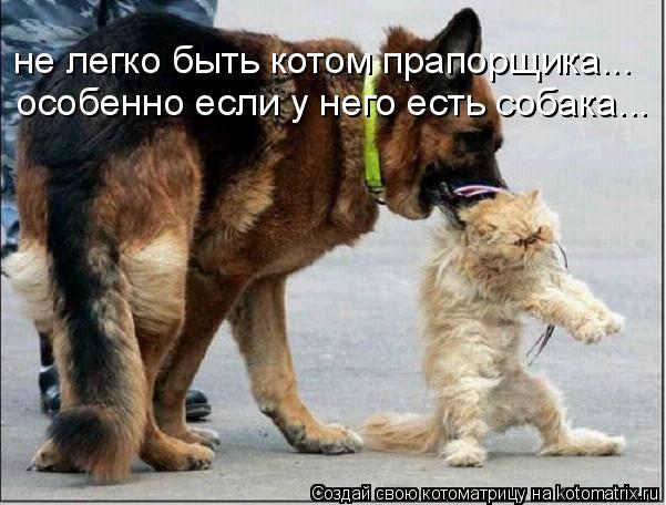 Котоматрица: не легко быть котом прапорщика... особенно если у него есть собака...