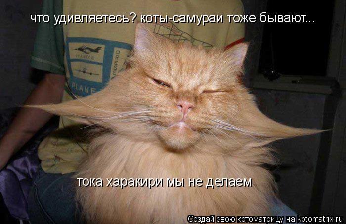 Котоматрица: что удивляетесь? коты-самураи тоже бывают... тока харакири мы не делаем