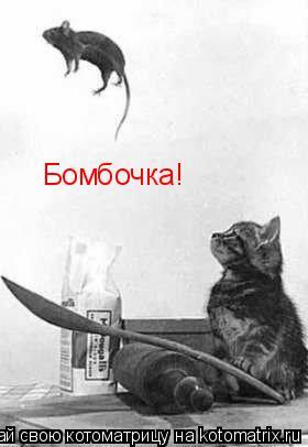 Котоматрица: Бомбочка!