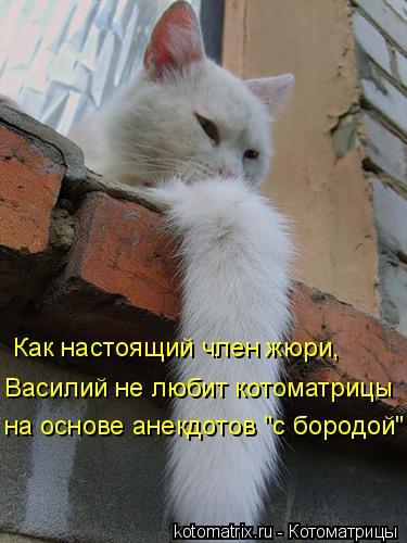 """Котоматрица: Как настоящий член жюри, Василий не любит котоматрицы на основе анекдотов """"с бородой"""""""