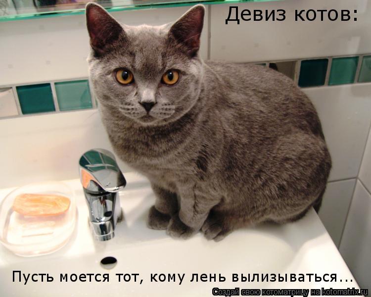 Котоматрица: Девиз котов: Пусть моется тот, кому лень вылизываться...
