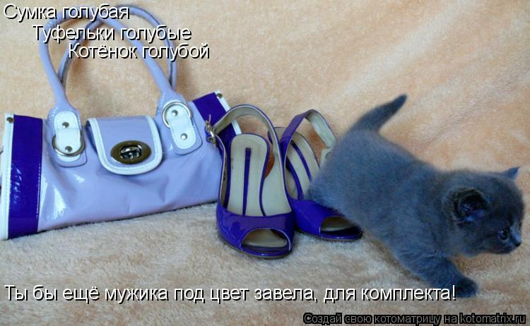 Котоматрица: Сумка голубая Туфельки голубые Котёнок голубой Ты бы ещё мужика под цвет завела, для комплекта!
