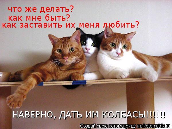 Котоматрица: что же делать? как мне быть? как заставить их меня любить? НАВЕРНО, ДАТЬ ИМ КОЛБАСЫ!!!!!!