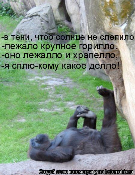 Котоматрица: -в тени, чтоб солнце не слепило, -лежало крупное горилло. -оно лежалло и храпелло, -я сплю-кому какое делло!