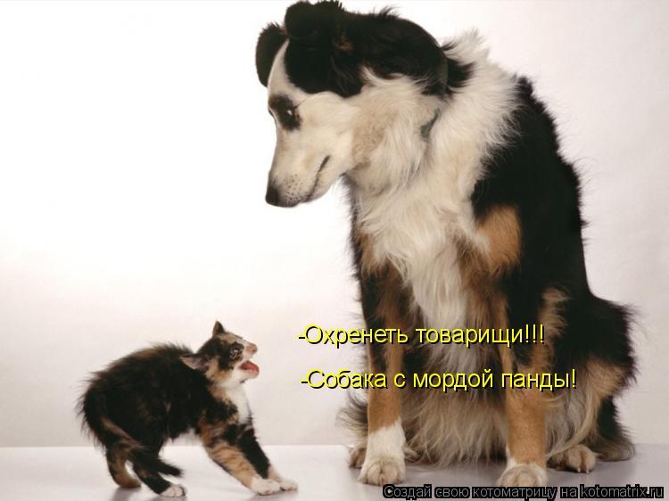 Котоматрица: -Охренеть товарищи!!! -Собака с мордой панды!