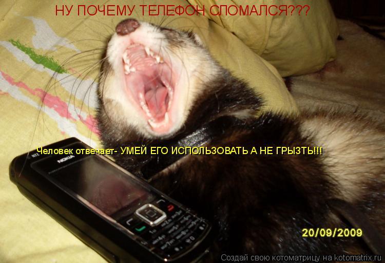 Котоматрица: НУ ПОЧЕМУ ТЕЛЕФОН СЛОМАЛСЯ??? Человек отвечает- УМЕЙ ЕГО ИСПОЛЬЗОВАТЬ А НЕ ГРЫЗТЬ!!!