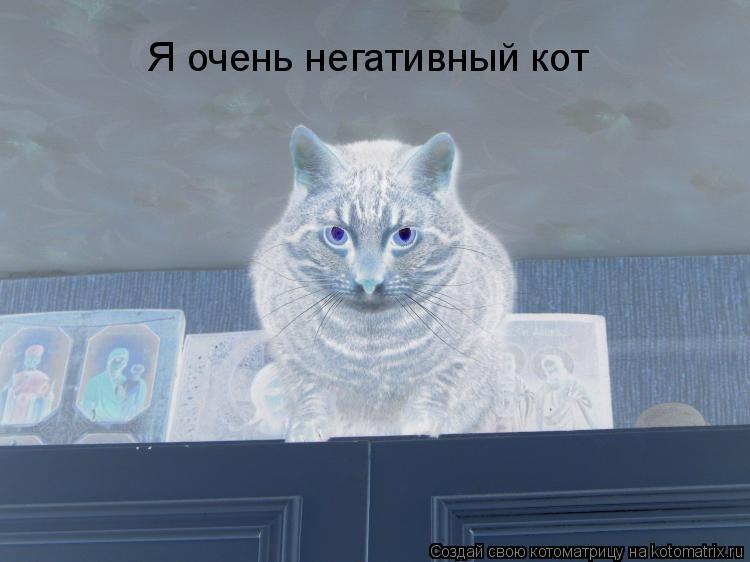 Котоматрица: Я очень негативный кот