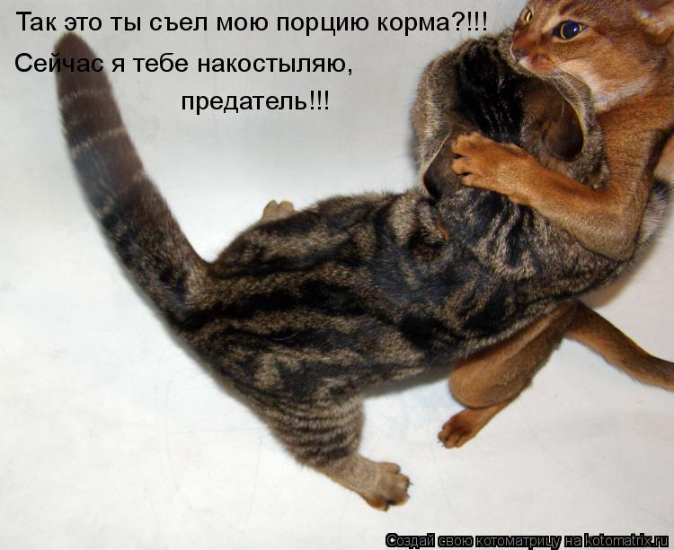 Котоматрица: Так это ты съел мою порцию корма?!!! Сейчас я тебе накостыляю,  предатель!!!
