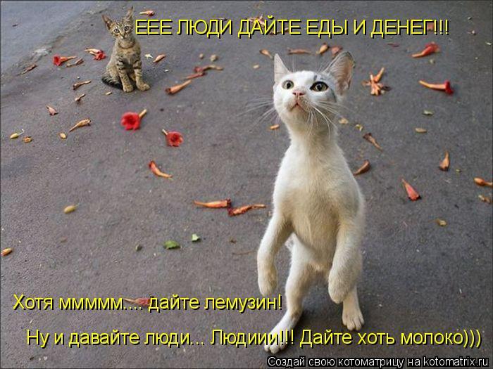 Котоматрица: ЕЕЕ ЛЮДИ ДАЙТЕ ЕДЫ И ДЕНЕГ!!! Хотя ммммм.... дайте лемузин! Ну и давайте люди... Людиии!!! Дайте хоть молоко)))
