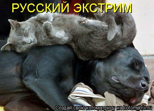 Котоматрица: РУССКИЙ ЭКСТРИМ