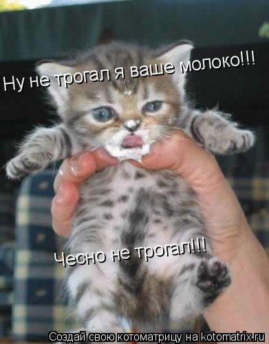 Котоматрица: Ну не трогал я ваше молоко!!! Чесно не трогал!!!