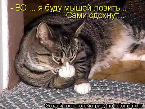 Котоматрица: - ВО ... я буду мышей ловить... Сами сдохнут...