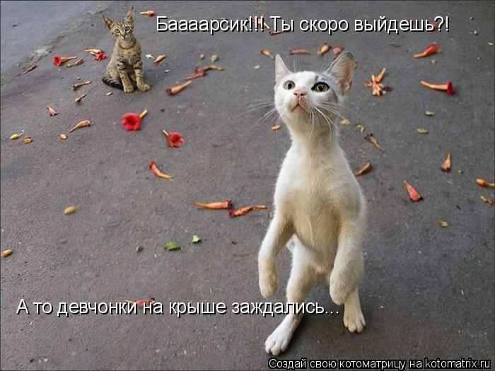 Котоматрица: Баааарсик!!! Ты скоро выйдешь?! А то девчонки на крыше заждались...