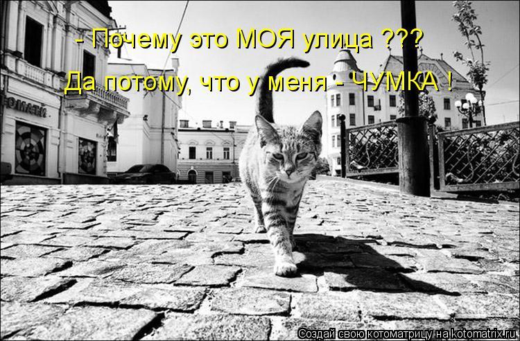 Котоматрица: - Почему это МОЯ улица ??? Да потому, что у меня - ЧУМКА !